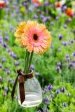 Gerbera en florero de cristal colgante Imagenes de archivo