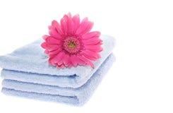 Gerbera en la toalla azul imagen de archivo