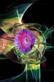 Gerbera et improvization multicolore par la lumière à un arrière-plan photographie stock