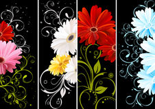 Gerbera floral background Royalty Free Stock Photo