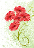Gerbera floral background. For your design Stock Photos