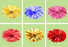 Gerbera floral set. For your design Royalty Free Stock Photos
