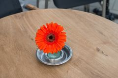 Gerbera flower in ashtray, No smoking concept, stop smoking, Asteraceae. Gerbera flower in ashtray standing on table, No smoking concept, Transvaal daisy royalty free stock photo