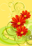 Gerbera flower background design Stock Images