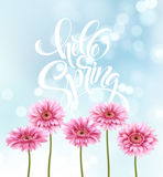 Gerbera Flower Background and Hello Spring Lettering. Vector Illustration Royalty Free Stock Photography