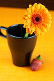 Gerbera flower in  black cup of the orange fabric Stock Photos