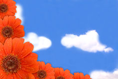Gerbera flower on blue sky. Abstract spring background. Red gerbera flower and Blue sky Royalty Free Stock Photography
