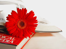 Gerbera flower on the books Royalty Free Stock Photos