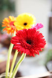 Gerbera flower in  decoration background design Stock Photo