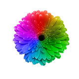 Gerbera flower in different colors Stock Images