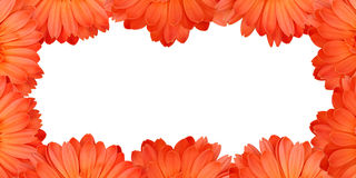 Gerbera flower frame Royalty Free Stock Photos