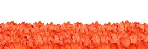 Gerbera flower frame Royalty Free Stock Images