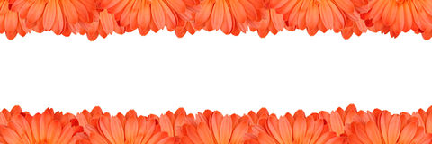 Gerbera flower frame Stock Photography