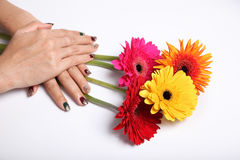 Gerbera flower and hands in isolated white background decoration Stock Images
