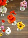 Gerbera flower Royalty Free Stock Image