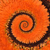 Gerbera flower infinity spiral abstract background Stock Photography