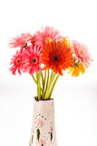 Gerbera flower isolated on whitebackground.  Stock Photography