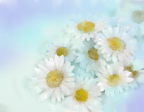 Oil painting white Gerbera flower Royalty Free Stock Photos