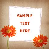 Gerbera flower and old paper for text and backgrou Royalty Free Stock Photography