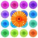 Gerbera flower set isolated on white. plus EPS10 Stock Images
