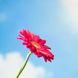 Flower on sky background Royalty Free Stock Photography