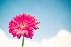 Flower on sky background Royalty Free Stock Image