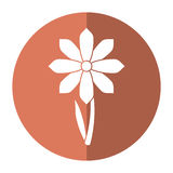 Gerbera flower spring ornament shadow Royalty Free Stock Image