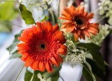 Gerbera flower standing on the window. Bouquet with gerbera standing on the window Royalty Free Stock Photos