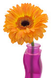 Gerbera flower in a vase. Isolated on white Royalty Free Stock Photography
