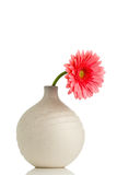 Gerbera. Royalty Free Stock Photography