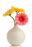 Gerbera. Royalty Free Stock Image