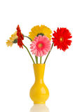 Gerbera. Royalty Free Stock Images