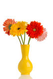 Gerbera. Royalty Free Stock Photos