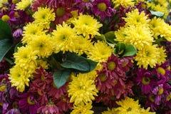 Gerbera flower Royalty Free Stock Photography