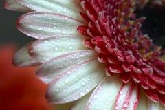 Gerbera flower. Yellow, Purple and pink hydrangea stock photography