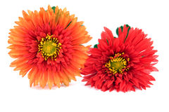 Gerbera flowers Royalty Free Stock Image