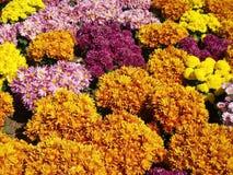 Gerbera flowers Royalty Free Stock Photos