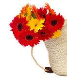 Gerbera flowers in basket Stock Images
