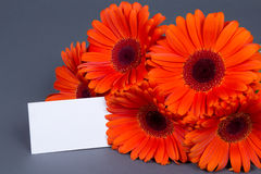 Gerbera flowers with blank card for text Stock Images