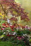 Gerbera flowers blooming at Stock Photo