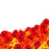 Gerbera flowers border Stock Photography