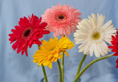 Gerbera flowers bouqet Royalty Free Stock Images