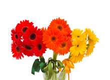 Gerbera flowers bouquet close up Royalty Free Stock Photography