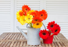 Gerbera flowers bouquets Stock Photos