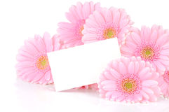 Gerbera flowers and a card Royalty Free Stock Image