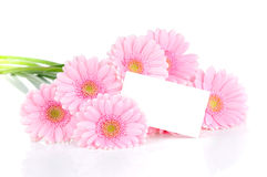Gerbera flowers and a card Royalty Free Stock Photo