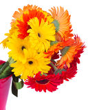 Gerbera flowers  close up Royalty Free Stock Photo