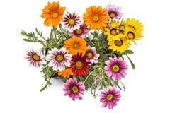 Gerbera flowers Royalty Free Stock Photography