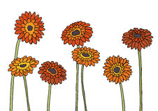 Gerbera. Flowers for composition, frame and other Royalty Free Illustration