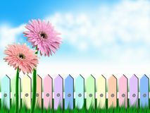 Gerbera flowers and fence royalty free illustration